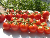 pomodorino-e1408619362514